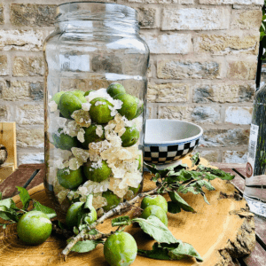 Greengages in a large jar with rock sugar, ready for the addition of vodka to make plum wine. Whole greengages on the stem lay around the jar as decoration